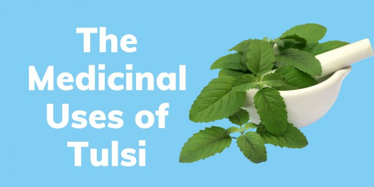 The Medicinal Uses of Tulsi